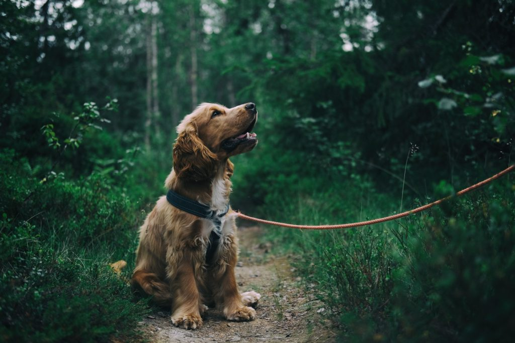 dog liability insurance germany comparison